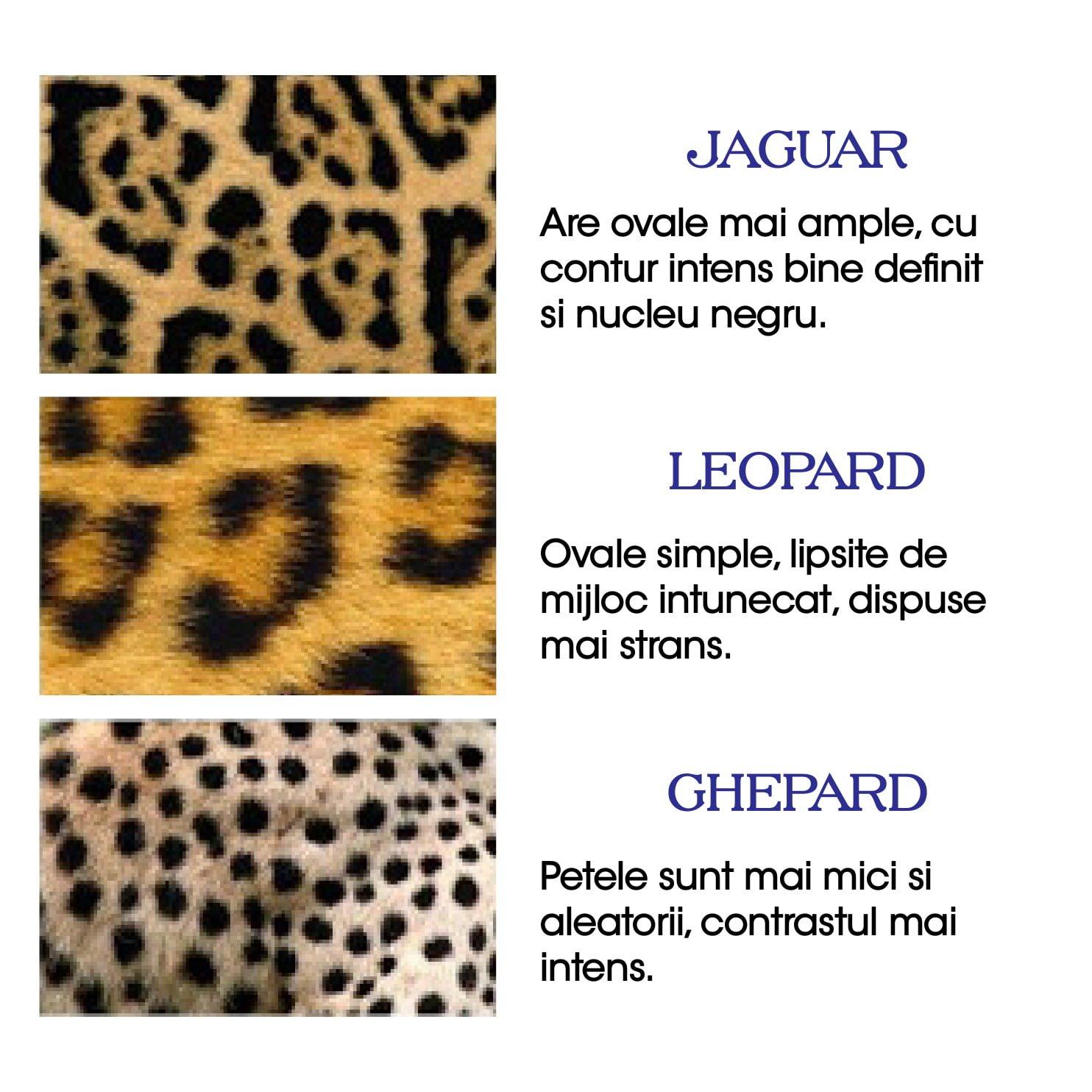 Motive animal print